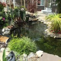 Tiểu cảnh sân vườn đẹp sân vườn thi công hồ cá koi hồ cá koi đẹp hồ cá koi mini