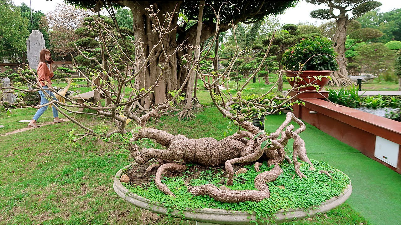 Toàn bộ vườn cây cảnh nghệ thuật của Dũng Tân Thái Nguyên
