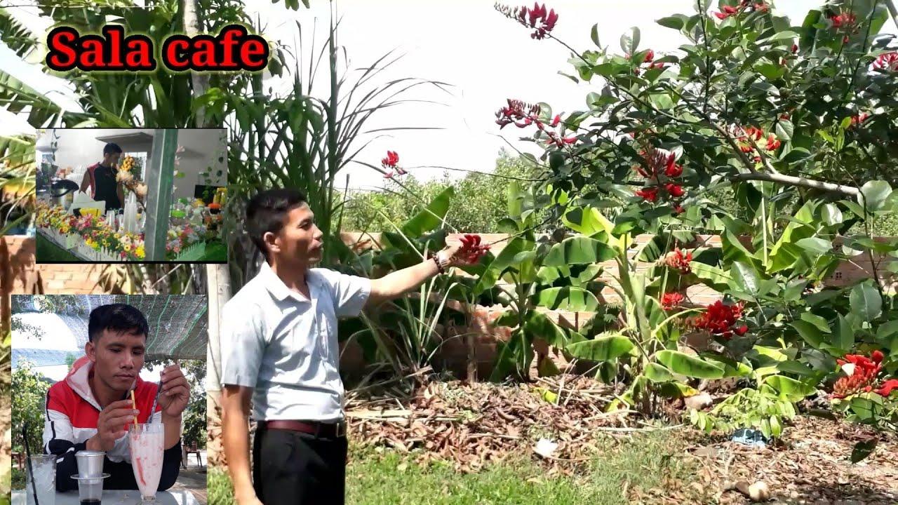 Trãi nghiệm /Sala cafe sân vườn_Cảnh đẹp nông thôn