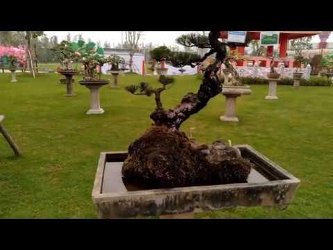 Trưng bày bonsai nghệ thuật tại Vinhome City Ha Nội
