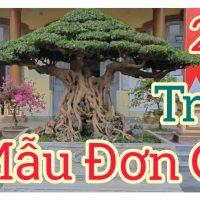 Trưng bầy Cây Cảnh Nghệ Thuật chào mừng đại hội Phường xã Ninh Khánh 2020