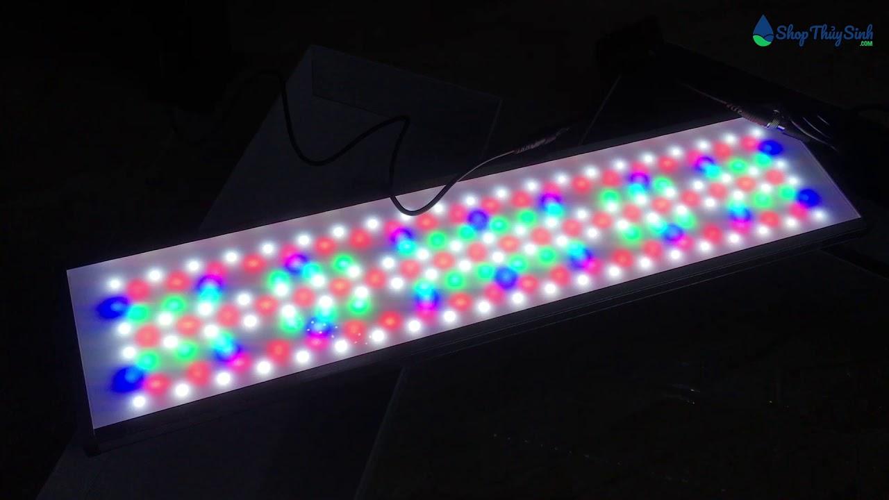 Trải nghiệm cây đèn thủy sinh Chihiros WRGB 60cm