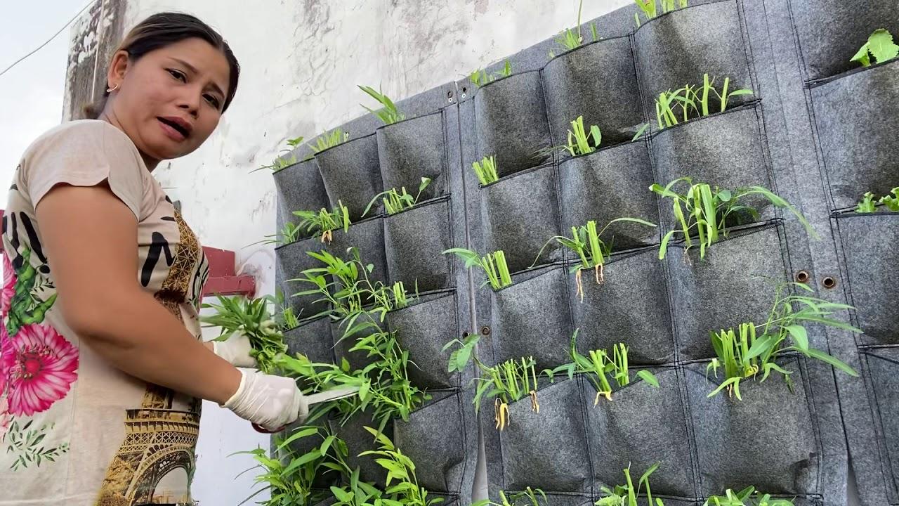 Trồng rau trên tường vườn rau thầm mỷ xuân thảo