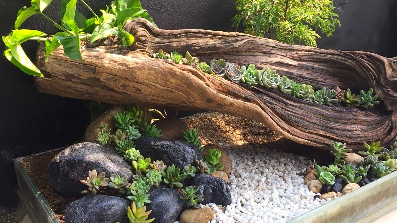 Trồng sen đá trên gốc cây mục