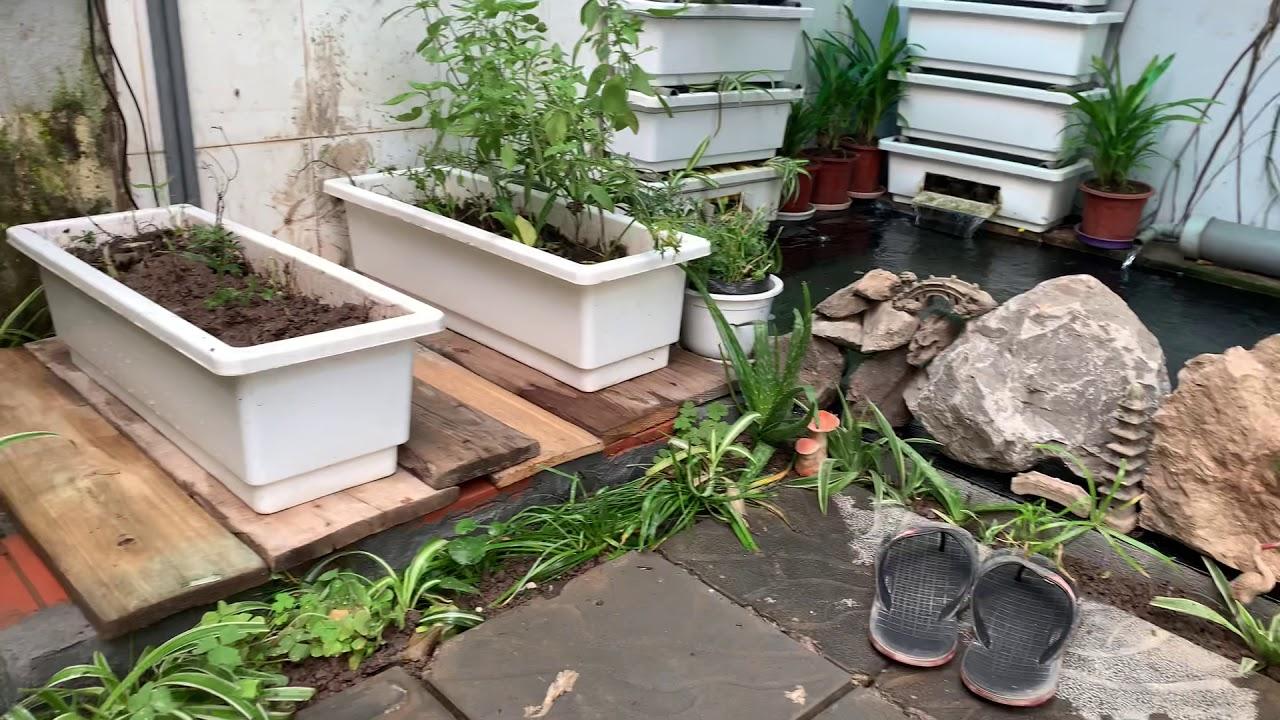 Trang trí tiểu cảnh sân vườn cho Hồ Koi (3)
