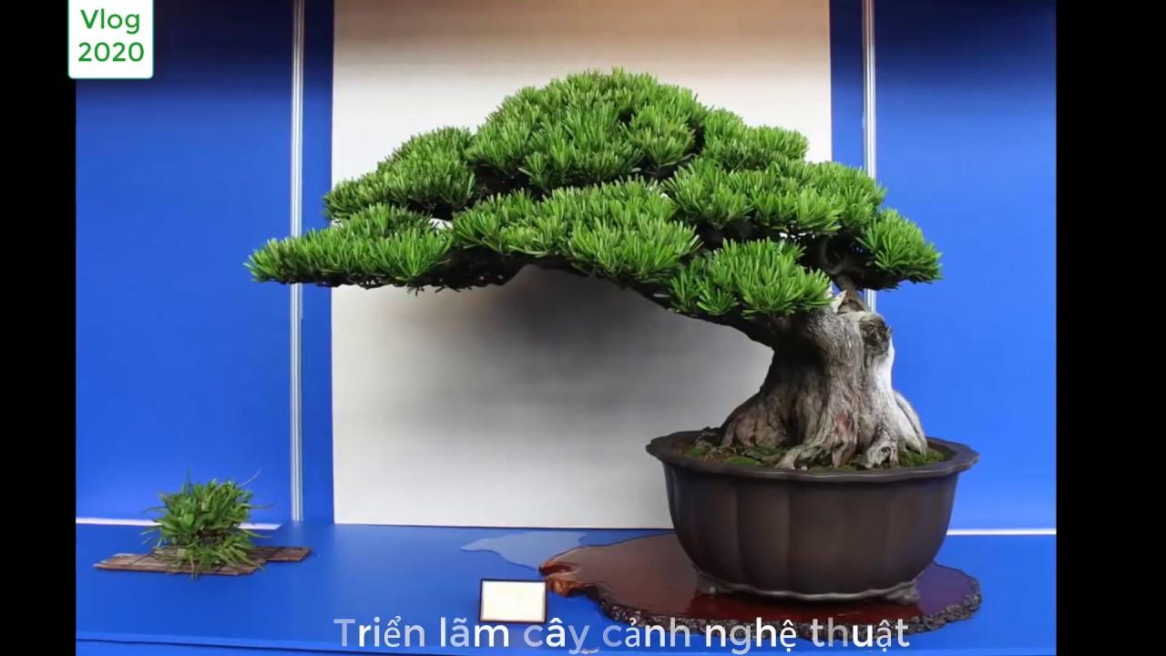 Triển Lãm Cây Cảnh Bonsai đẹp Tuyệt Vời 2020