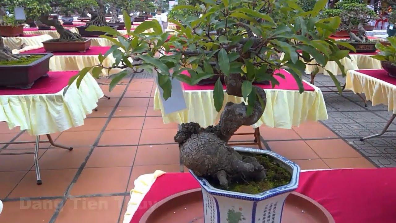 Triển lãm bonsai nghệ thuật tại Bắc Ninh 2019 siêu đẹp