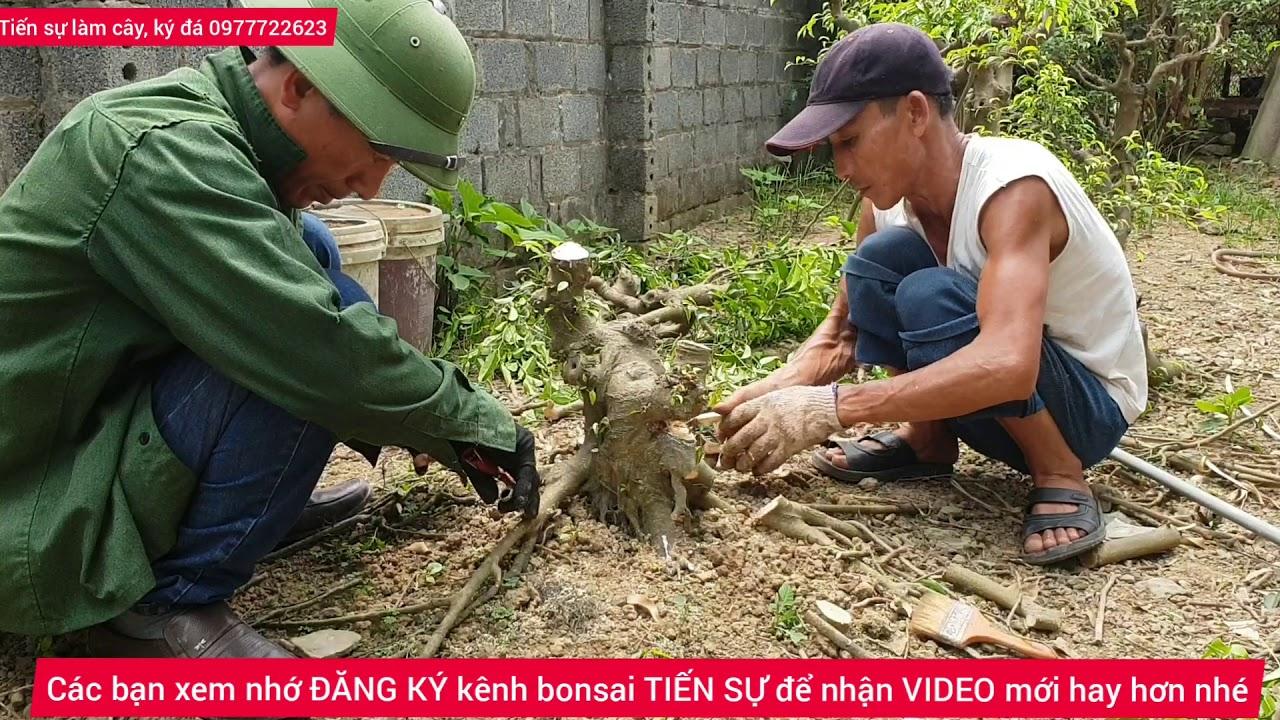 Ts147.bonsai TIẾN SỰ chia sẻ cách làm Cây bonsai cho  đẹp