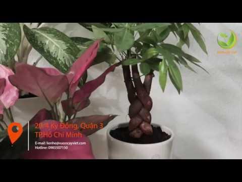 Tuyển chọn 5 Cây phong thủy trồng trong nhà chiêu tài lộc, rước may mắn
