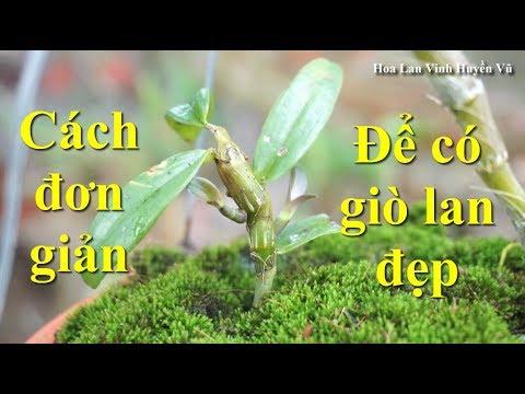 Tuyệt chiêu phủ rêu lên giá thể hoa lan - Độc đẹp và hiệu quả thì...