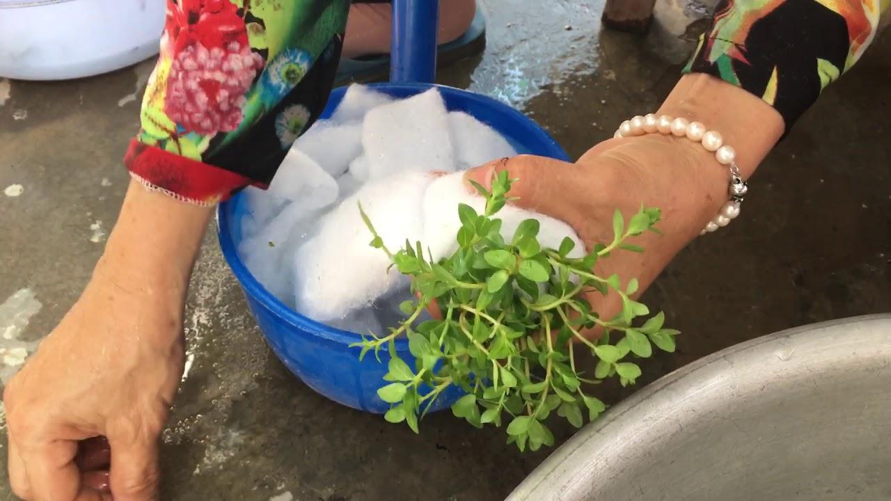 Vô chậu cây thủy sinh để bán