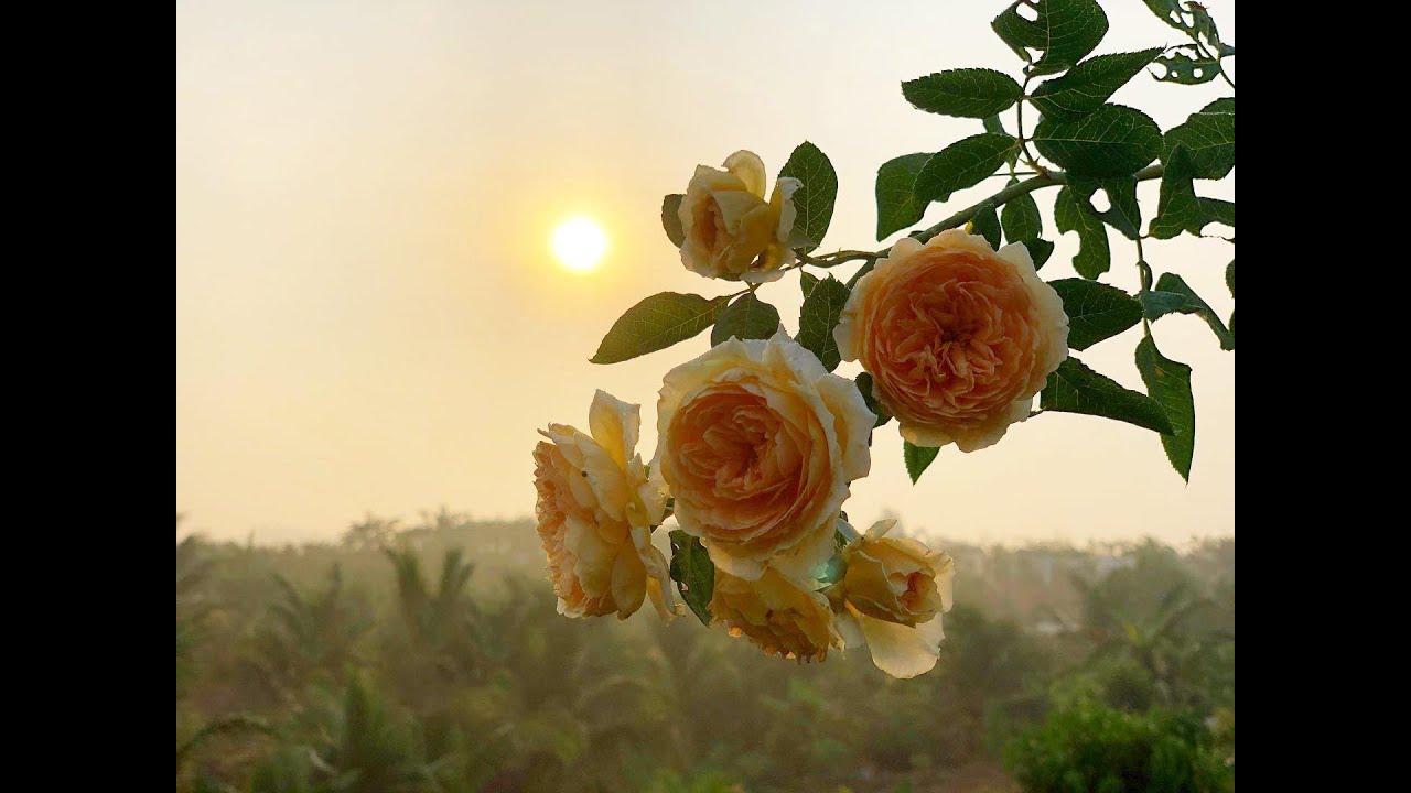 Vườn đẹp ở nông thôn - 20 mẫu sân vườn đẹp đầy hoa -  Thời thanh xuân sẽ qua