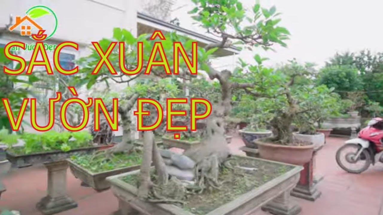 Vườn Cây Cảnh Đẹp Nhất Mê Linh Hà Nội | Nhóm Vĩnh Nguyễn Cây Cảnh