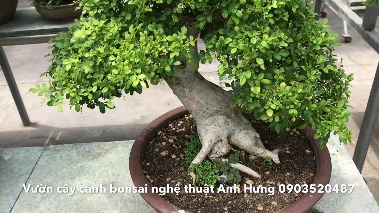 Vườn Cây Cảnh Bonsai Nghệ Thuật Anh Hưng 0903520487