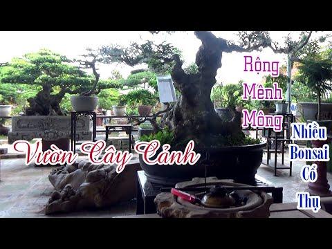Vườn Cây Cảnh Rộng Mênh Mông Rất Nhiều Bonsai Cổ Thụ Đẹp