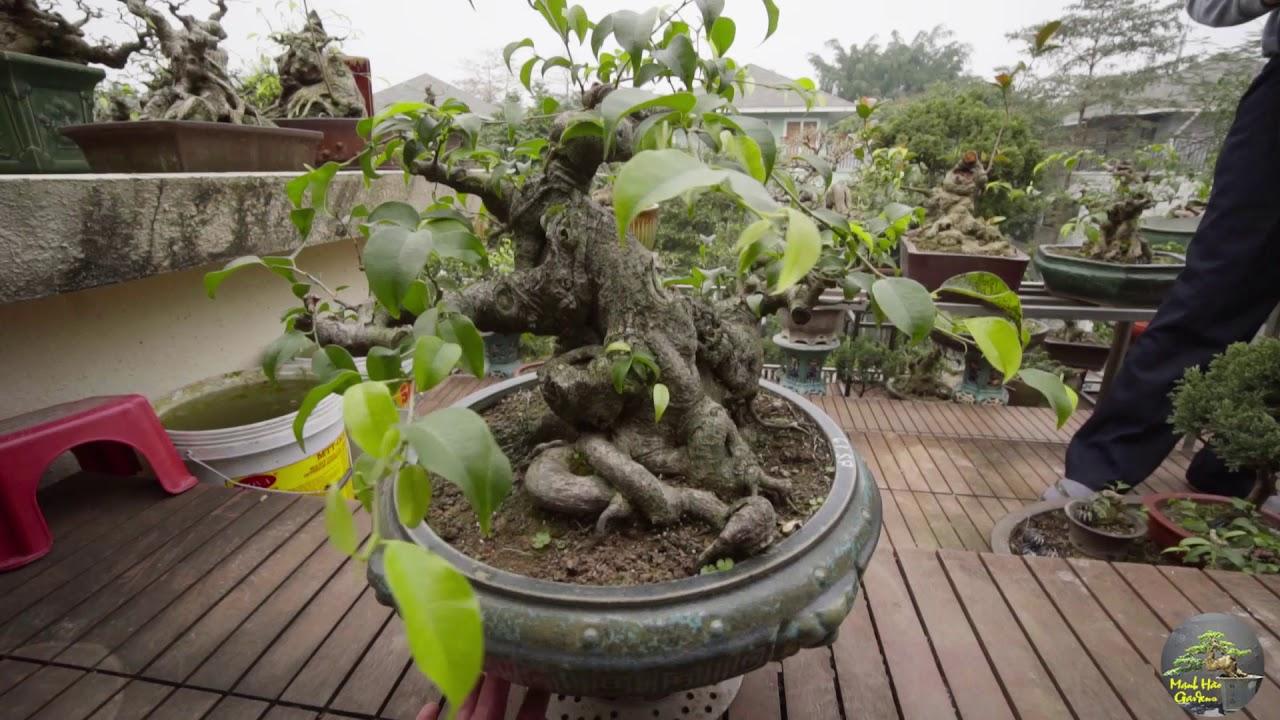 Vườn Cây Mini Bonsai Quá Tuyệt Vời