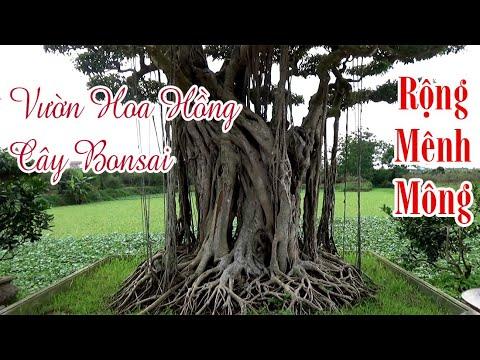 Vườn Hoa Hồng Và Cây Bonsai Rộng Mênh Mông