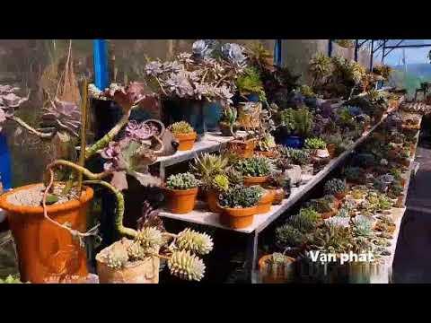 Vườn Sen Đá Vạn Phát