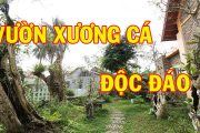 Vườn Xương Cá Độc Đáo, Đắt Giá Tại Bắc Ninh   Sân Vườn Đẹp
