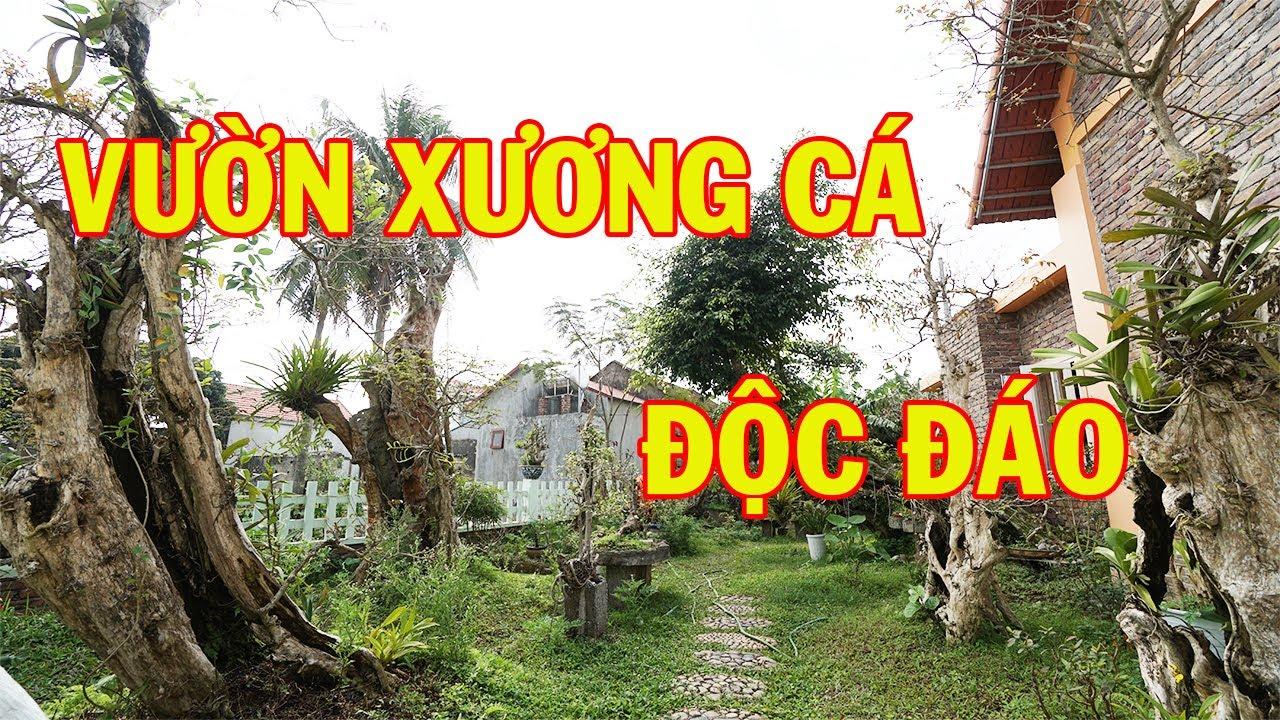 Vườn Xương Cá Độc Đáo, Đắt Giá Tại Bắc Ninh | Sân Vườn Đẹp