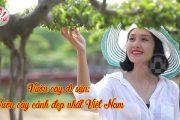 Vườn cây cảnh đẹp nhất Việt Nam