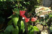 Vlog45 Nghệ Thuật bonsai cây cảnh