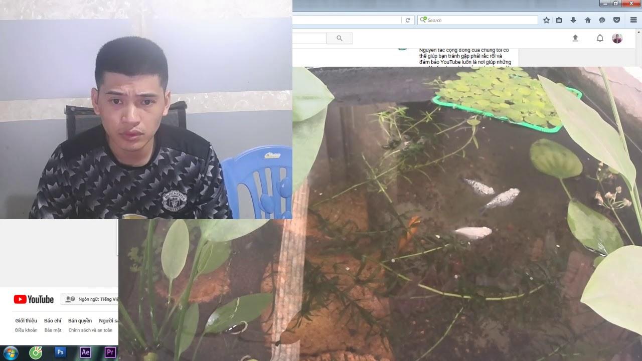 Vlogs 11 : Làm thế nào để cây thủy sinh lớn nhanh mà cá lại khỏe