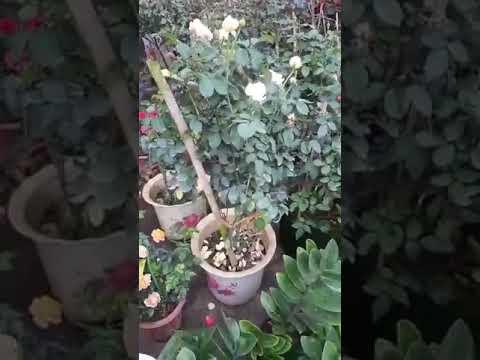 chăm sóc cây cảnh : những chậu cây cảnh tuyệt đẹp