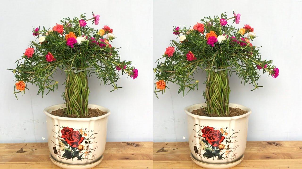 chậu bonsai hoa mười giờ để bàn dễ thương