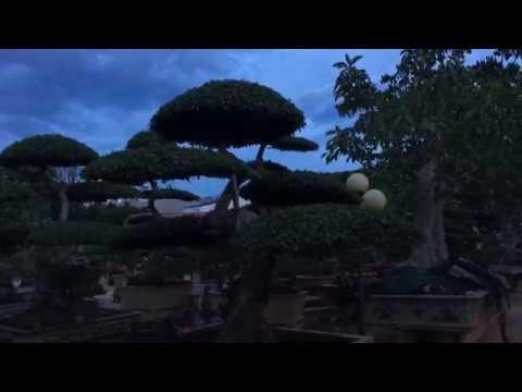 góc sân vườn Cây Cảnh Bảo Lâm