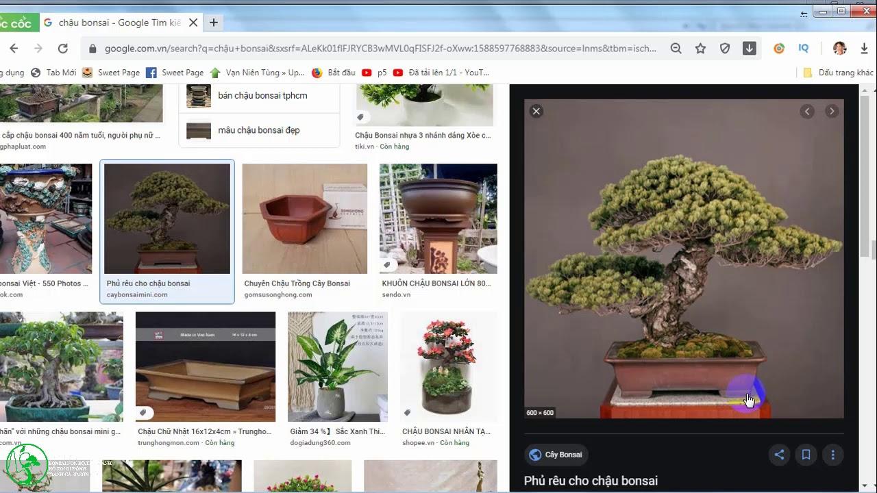 hướng dẫn vẽ demo cho cây bonsai tương lai