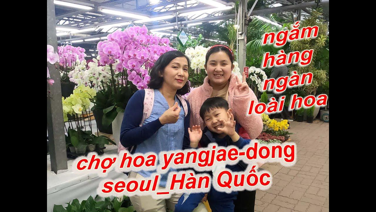 lóe mắt với chợ hoa cây cảnh lớn nhất tại Seoul, Hàn Quốc( the biggest flower market in seoul)