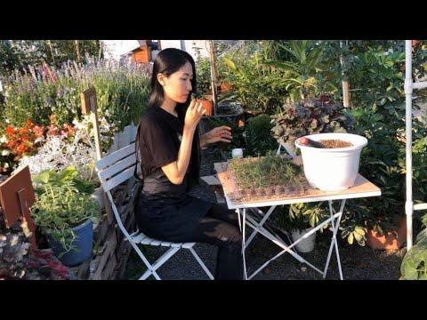 nhân giống cây Hương Thảo - Propagate Rosemary from cutting