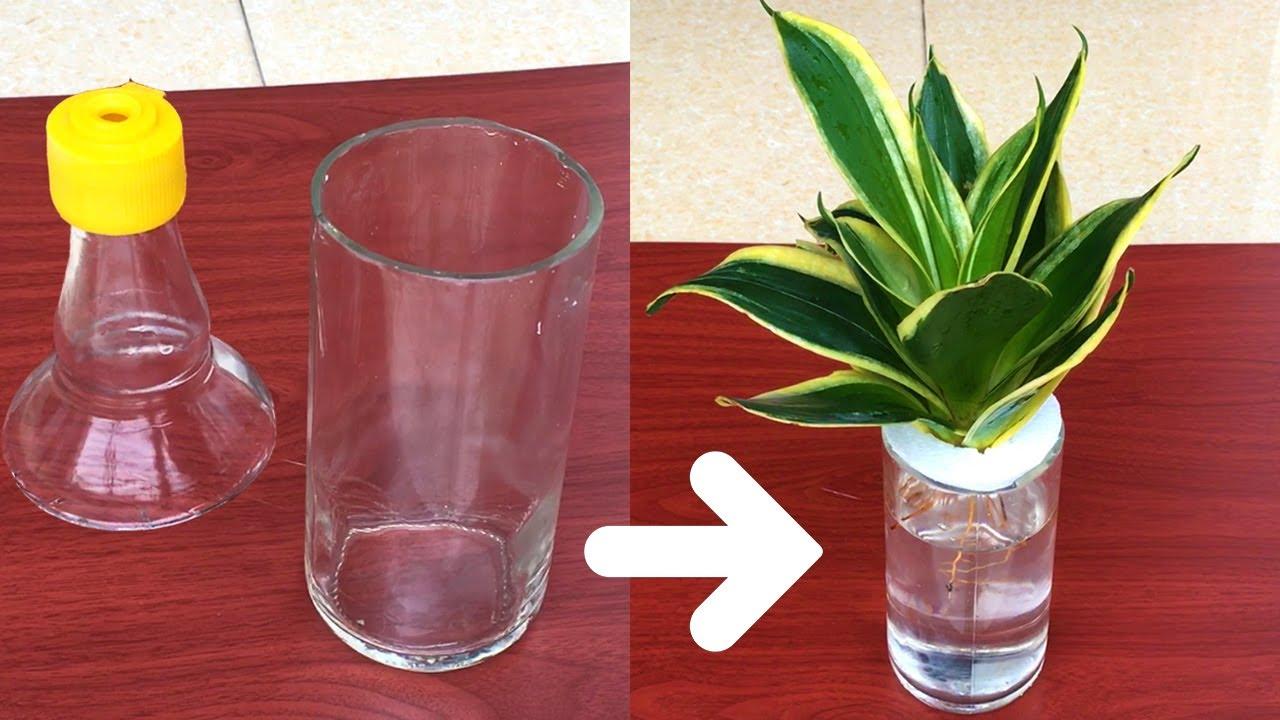 """""""Tận Dụng"""" Vỏ Chai Trồng Cây Lưỡi Hổ Trong Nước Thủy Sinh  Grow Snake plants in Recycle Glass Bottle"""