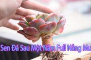 succulent Gia Nghia   Sen đá sau 1 năm không quan tâm sẽ như thế nào?