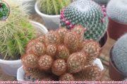 succulent Gia Nghia | Tên xương rồng và một số sen đá cao cấp.