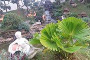 tạo thác nước hoàn chỉnh cho hồ koi, tiểu cảnh sân vườn đẹp
