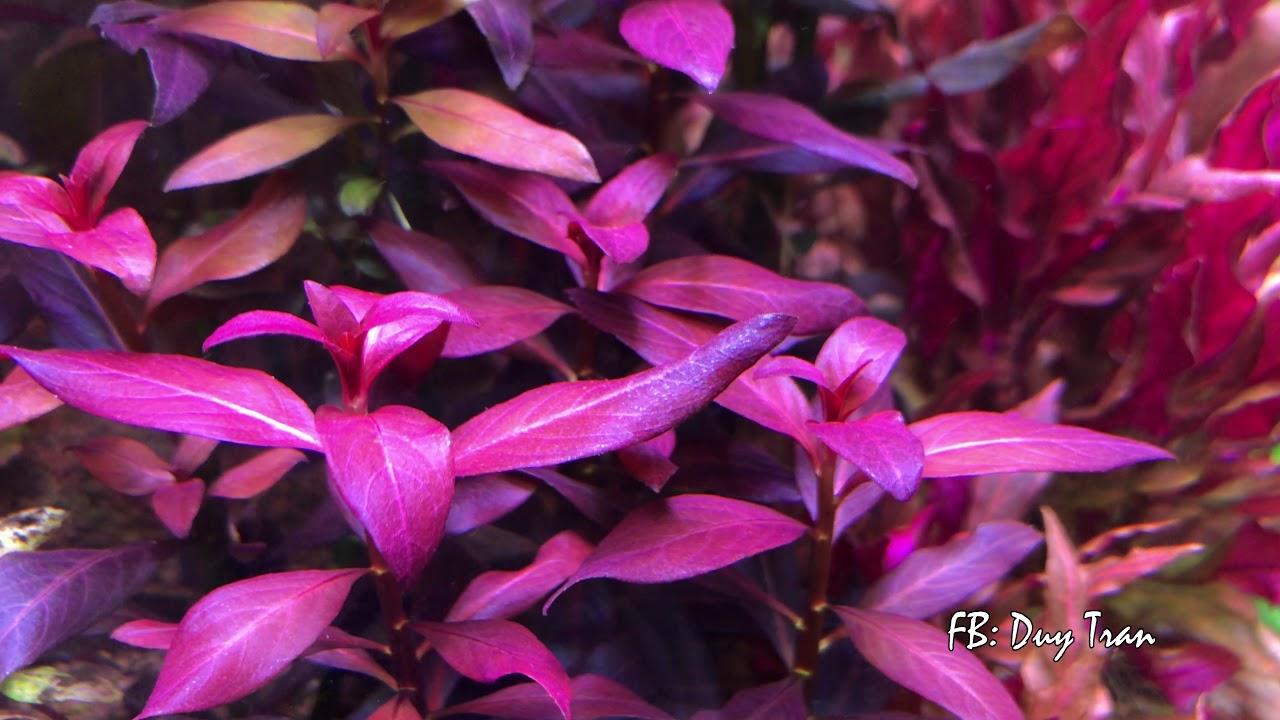 vẻ đẹp của các loài cây thủy sinh video 4K