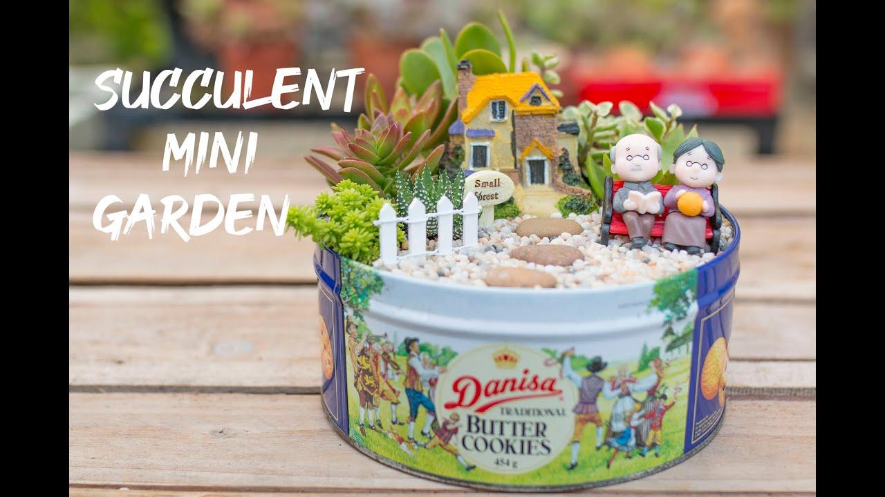 ăn bánh Danisa xong lấy cái hộp trồng sen đá đẹp xỉu lên xỉu xuống  다육이들   Suculentas   Succulents