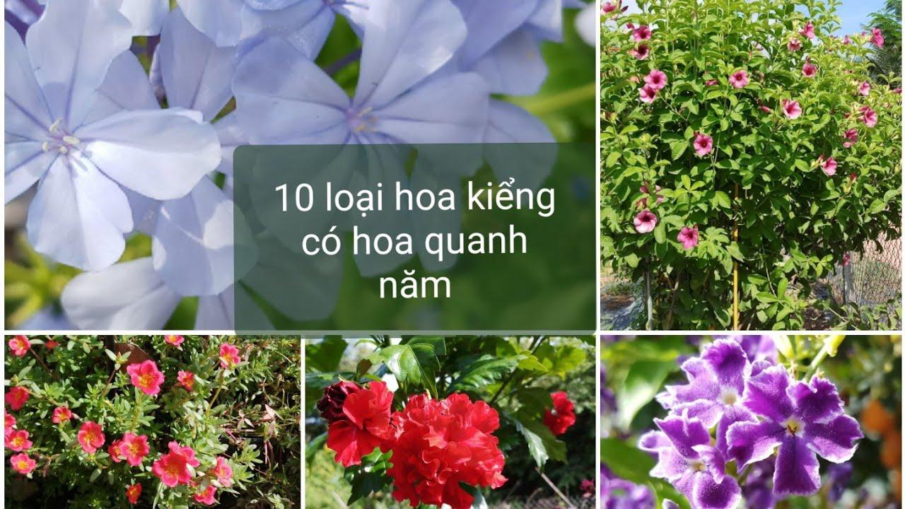 10 loại hoa kiểng có hoa quanh năm và dễ trồng