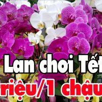 10 triệu 1 chậu Lan chơi Tết đi Chợ Hoa Tết ở Sài Gòn | Chợ  hoa Tết Quận 10