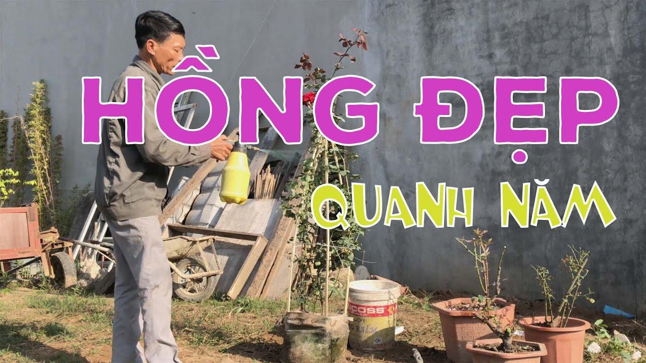 [253] Cách hăm sóc Hoa Hồng tươi đẹp quanh năm - CÂY CẢNH CHỢ HÀNG