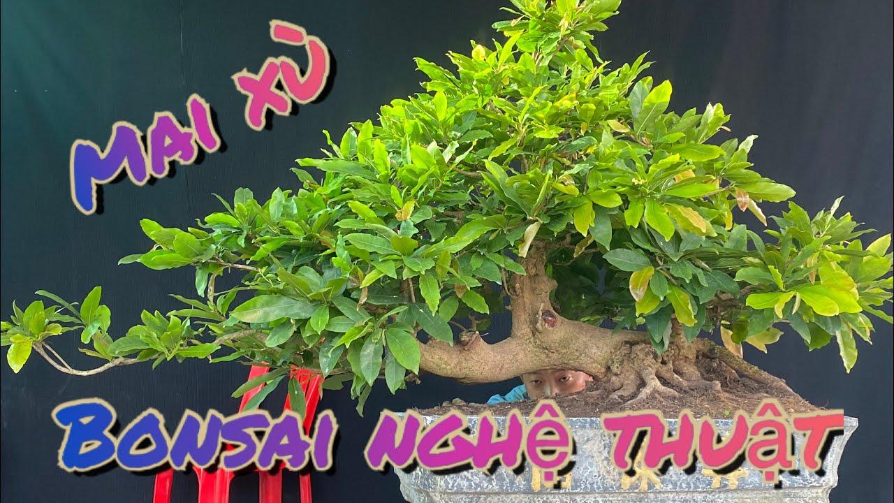 2/6/2020 3cây mai vàng bonsai dáng bay nghệ thuật/0972666608 nghĩa