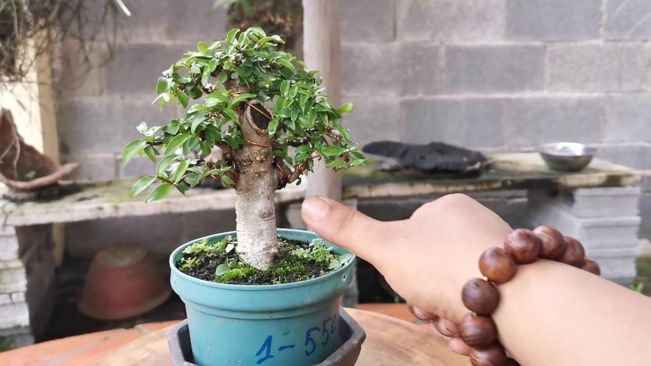 469:ĐÃ BÁN 9/6/20 Báo Giá Vườn Bonsai Mini Cường Zin. Liên Hệ 0374.113366. Cám ơn Ae.