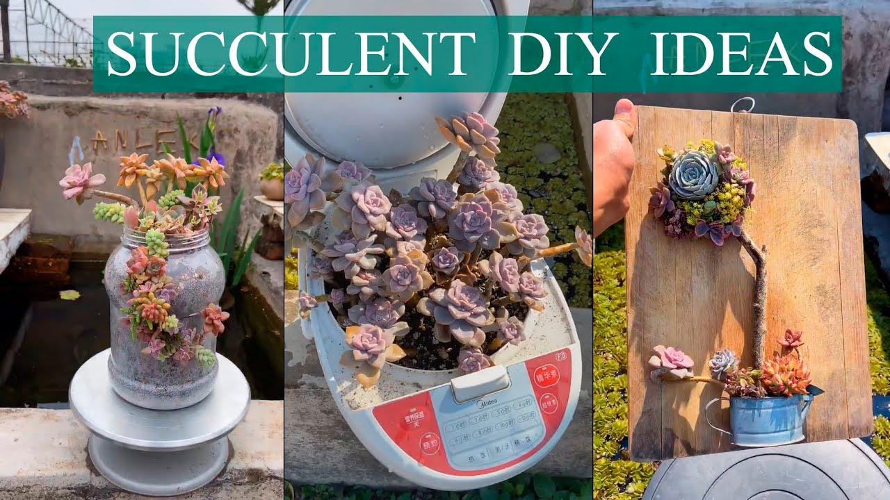 50 Succulent DIY ideas  50 Ý tưởng trang trí sen đá tuyệt đẹp  多肉植物  다육이들   Suculentas   Succulents
