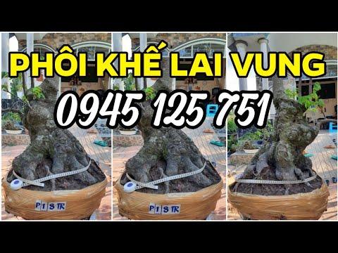 BÁO GIÁ PHÔI KHẾ LAI VUNG ngày 9/6/2020?0945 125 751 ĐIỂM? bonsai can tho