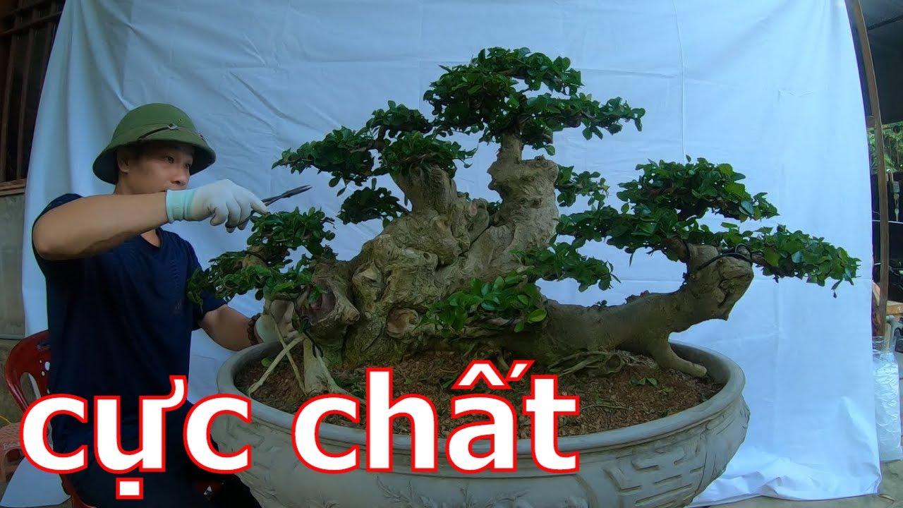 ✅Bán cả lô cây cảnh bonsai nhiều cây đẹp✔️BShp(35-Mr Đại 0967828345)