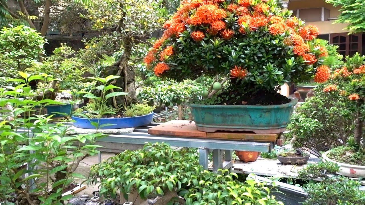 Báo giá những cây đặc biệt, quái và đẹp. selling beautiful bonsai trees