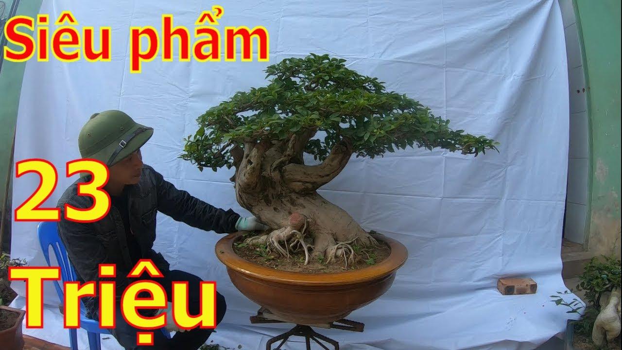✅Báo giá siêu phẩm hoa giấy và những cây bonsai cốt đẹp✔️BShp(33-A Đại 0967828345)