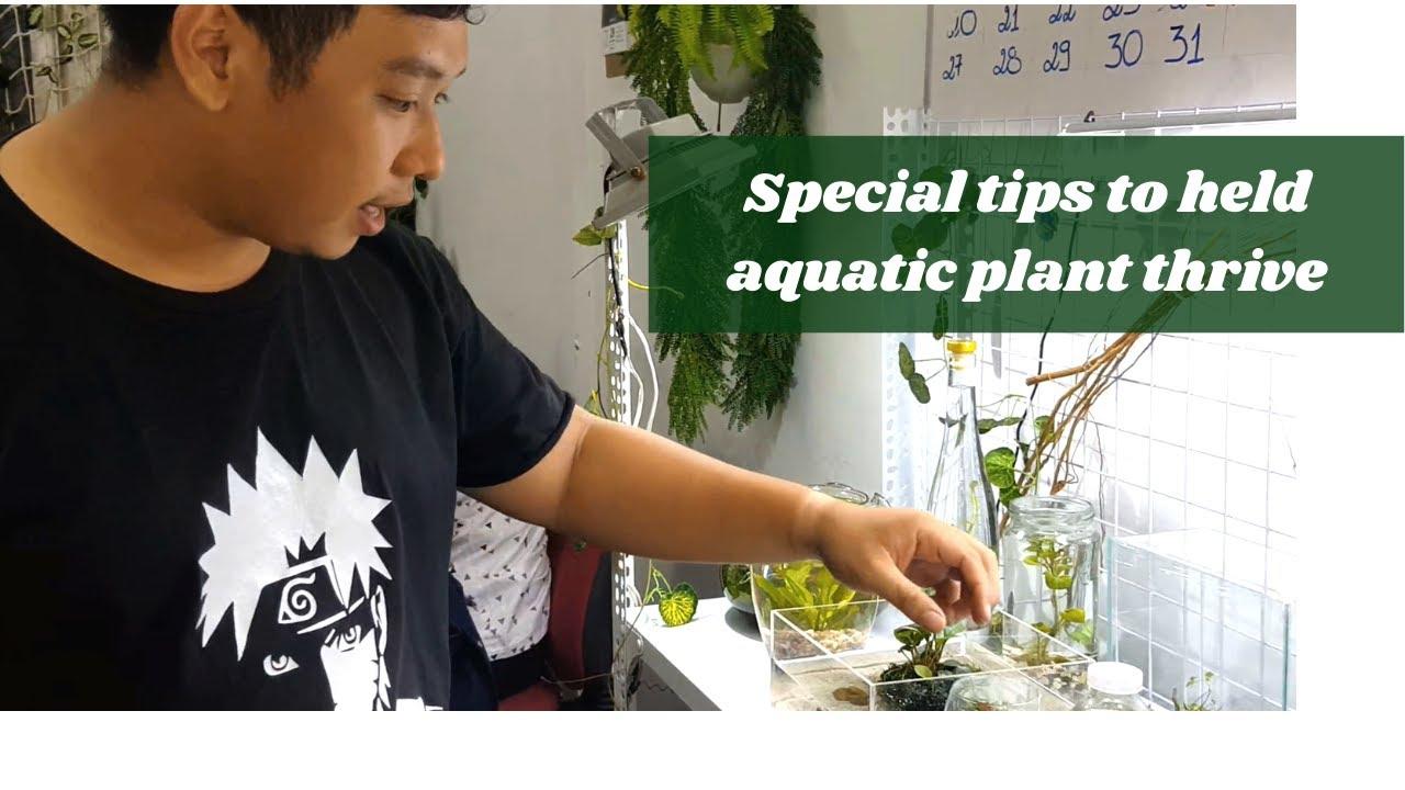 Bí quyết giúp cây thủy sinh phát triển mạnh mẽ | Tips to help aquatic plant thrive